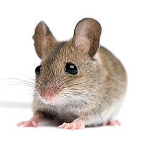 Rodent control by Best Defense Pest Control in Janesville