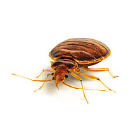 Bed bug control in Janesville WI