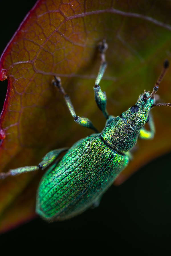 bug on a leaf in Janesville - Best Defense Pest Solutions