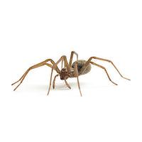 Spider control in Janesville