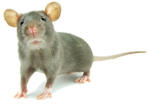 Rodent Removal Services in Janesville Wi by Best Defense Pest Solutions LLC