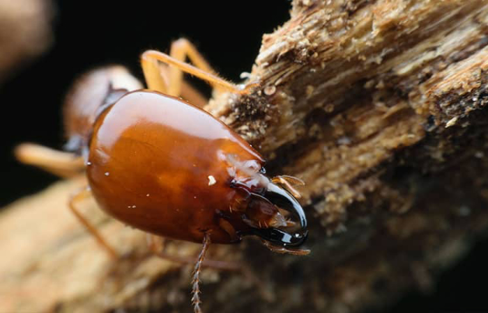 Signs of termites in your home